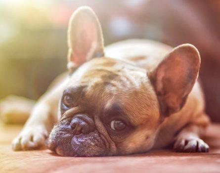 Na kolik vyjde pořízení psího kamaráda?